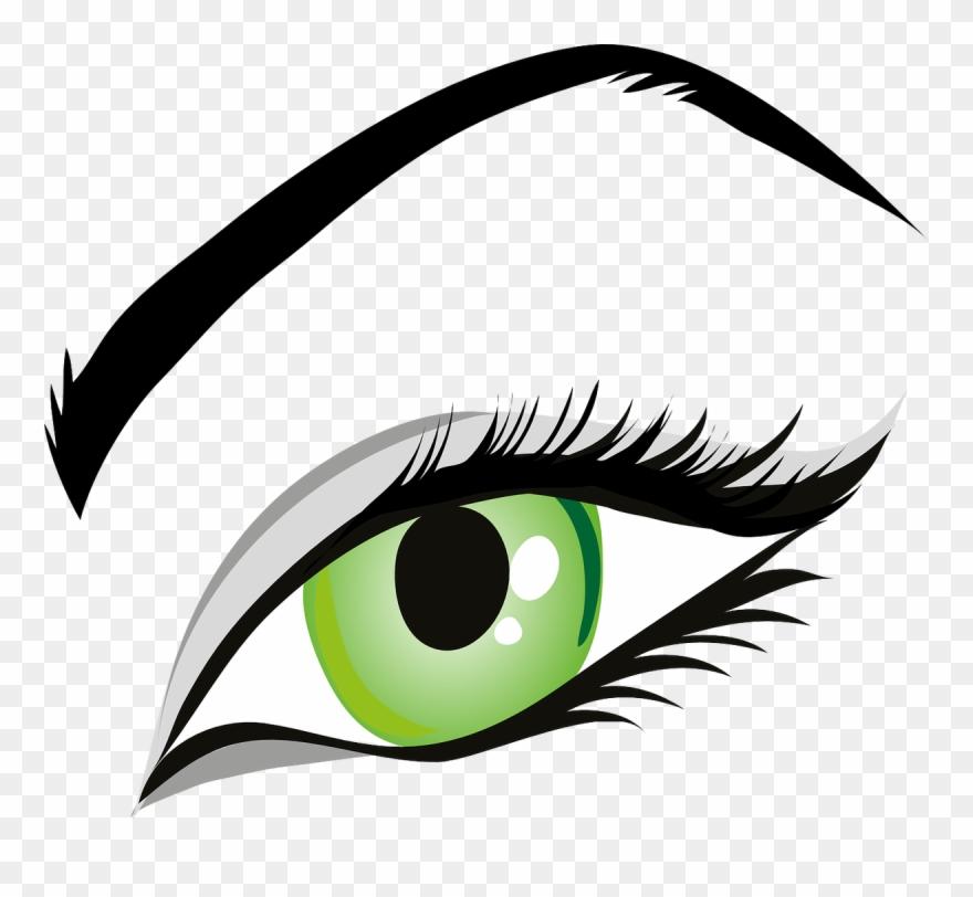 Eye, Green Eyes, Iris, Eyelid, Eyebrows, Brows, Seeing.