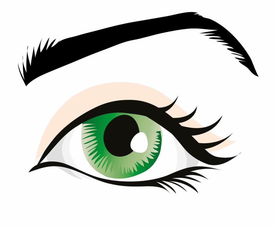 Eye Green Eyes Eyelid.