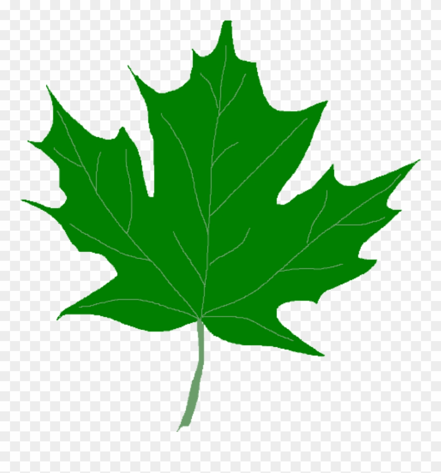 Green Leaf Clipart Green Maple Leaves Clipart Clip.