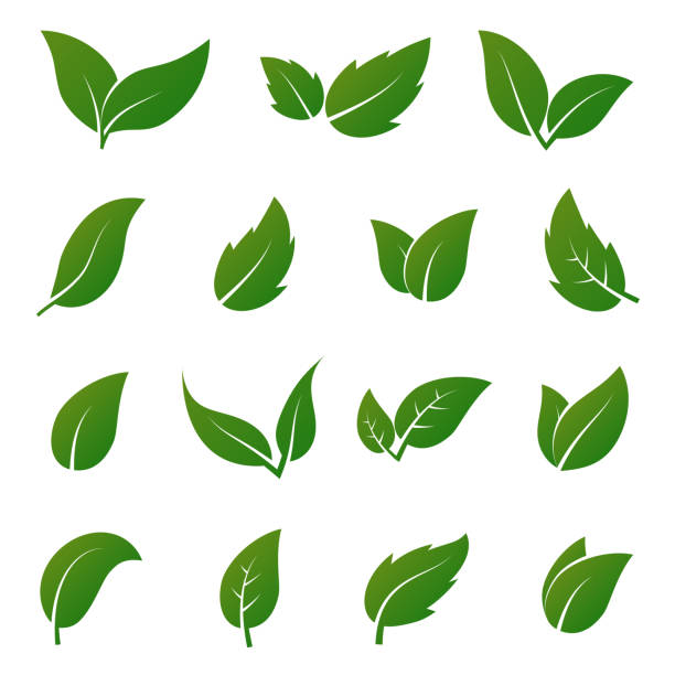 Best Green Leaf Illustrations, Royalty.