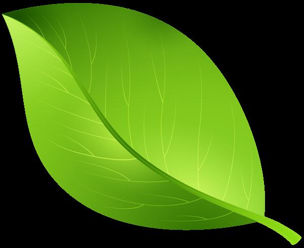 leaves Green leaf transparent clip art image gallery yopriceville.