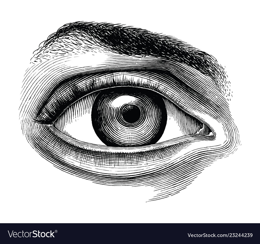 Anatomy of human eye hand draw vintage clip art.