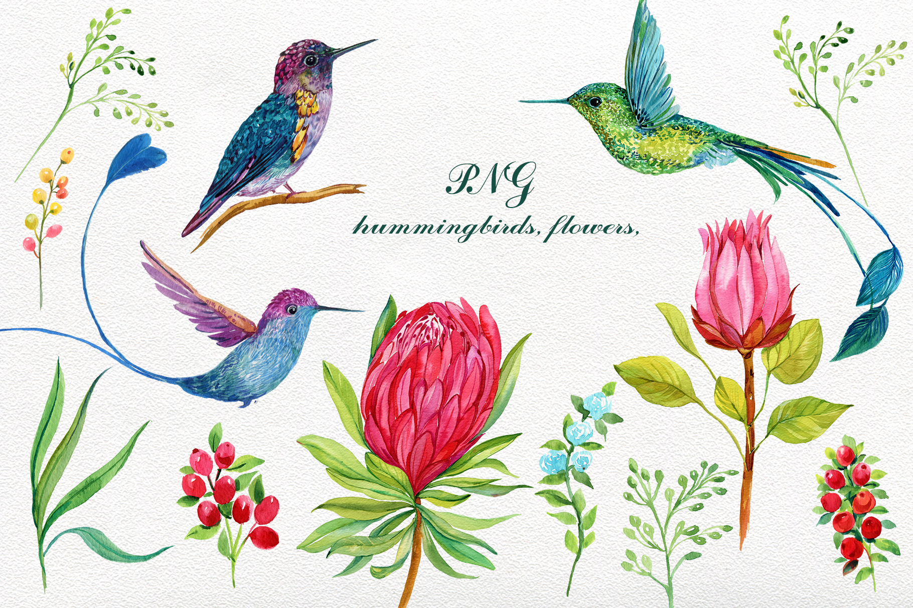 Hummingbirds Exotic Flowers Clipart.