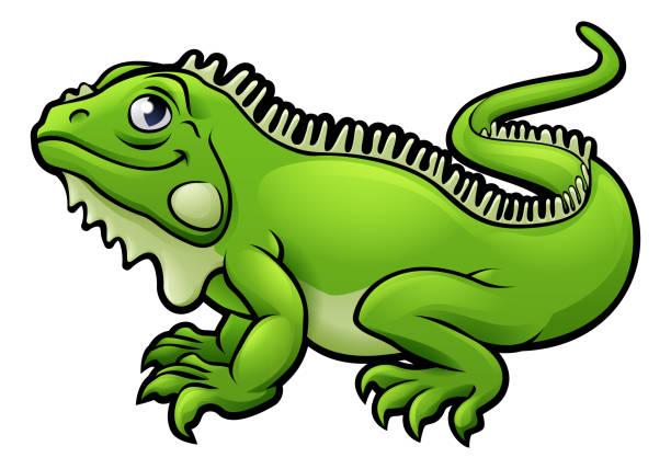 Best Iguana Illustrations, Royalty.