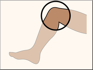 Clip Art: Parts of the Body: Knee Color Unlabeled I abcteach.com.