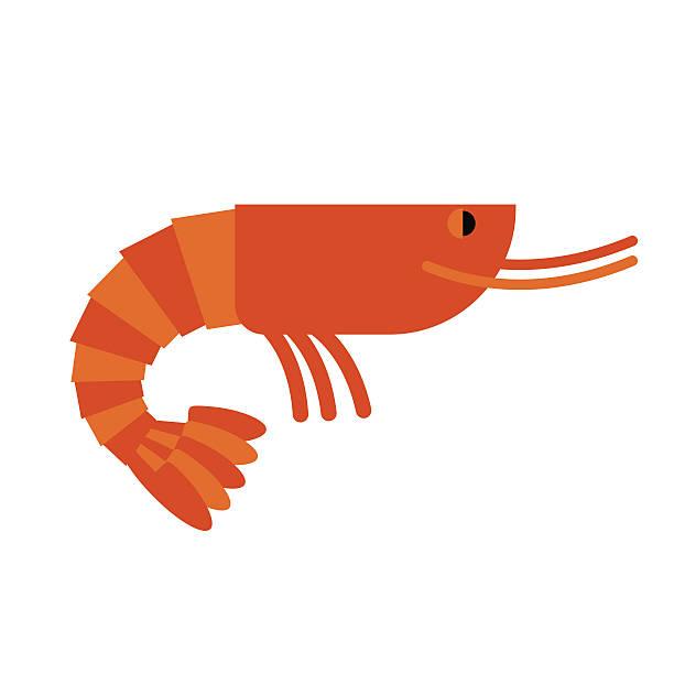 Best Krill Illustrations, Royalty.