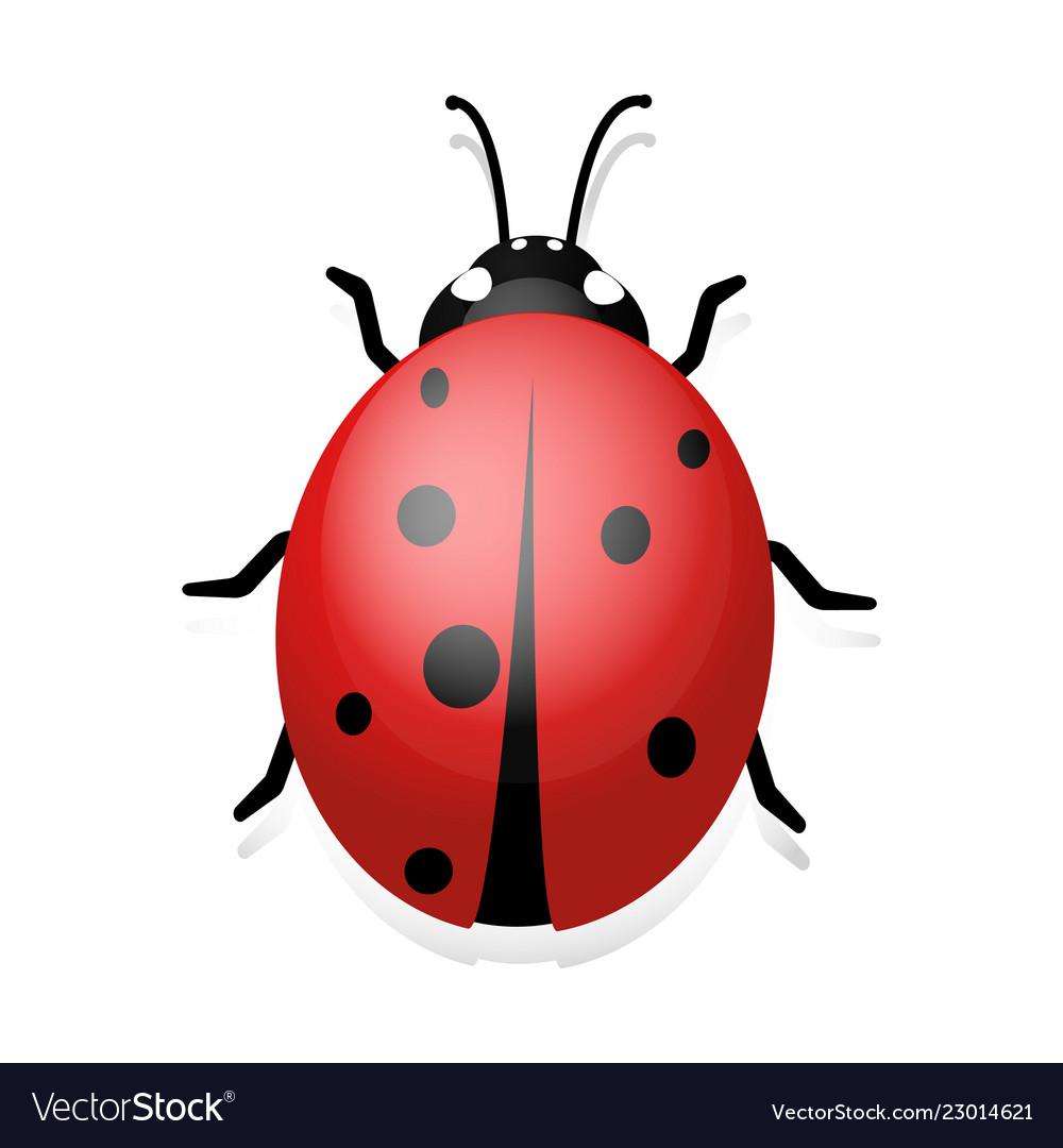 Ladybug clip art of ladybug.
