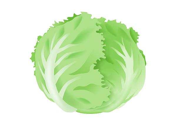 Best Iceberg Lettuce Illustrations, Royalty.