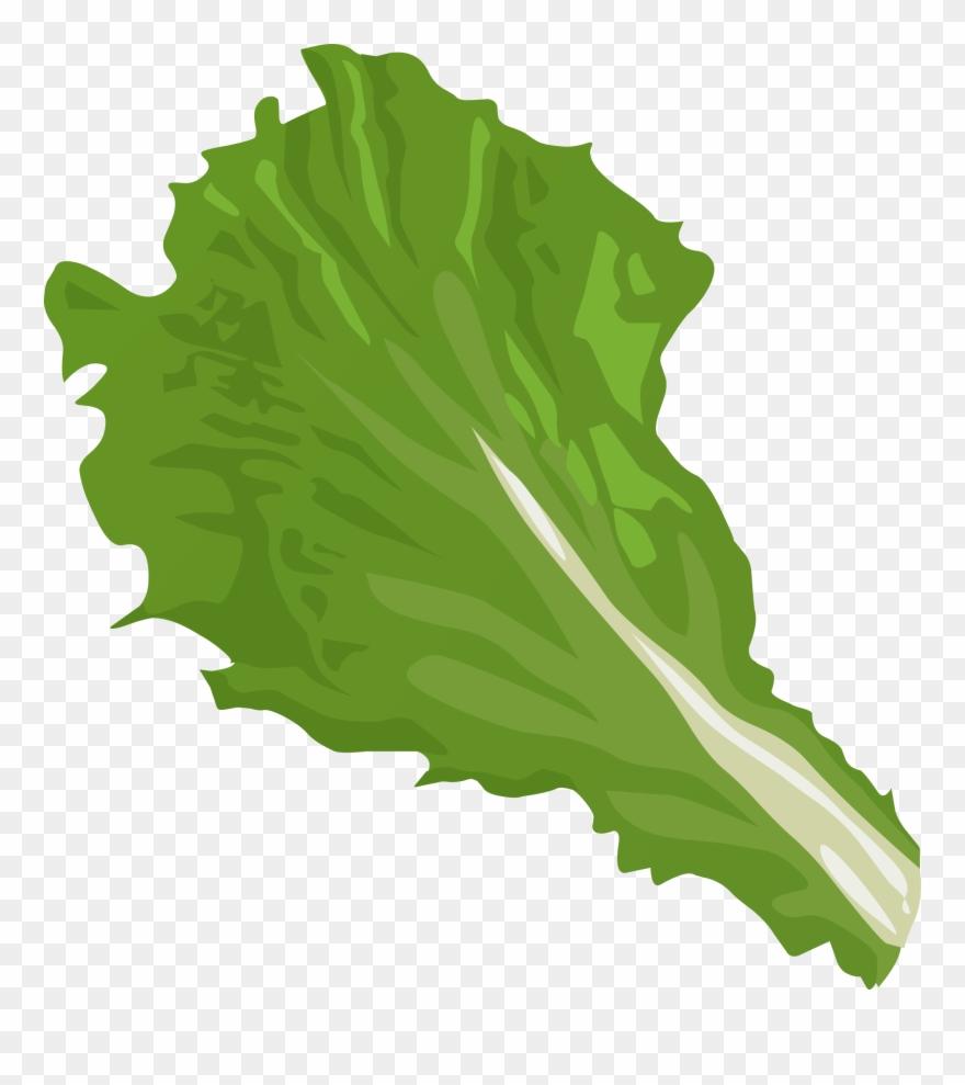 Lettuce At Getdrawings Com.