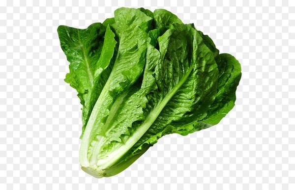 Butterhead lettuce Iceberg lettuce Caesar salad Clip art.