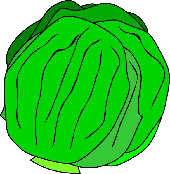 Whole Lettuce clip art Free vector in Open office drawing svg ( .svg.