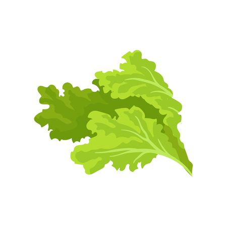 5,353 Lettuce Leaves Stock Vector Illustration And Royalty Free.