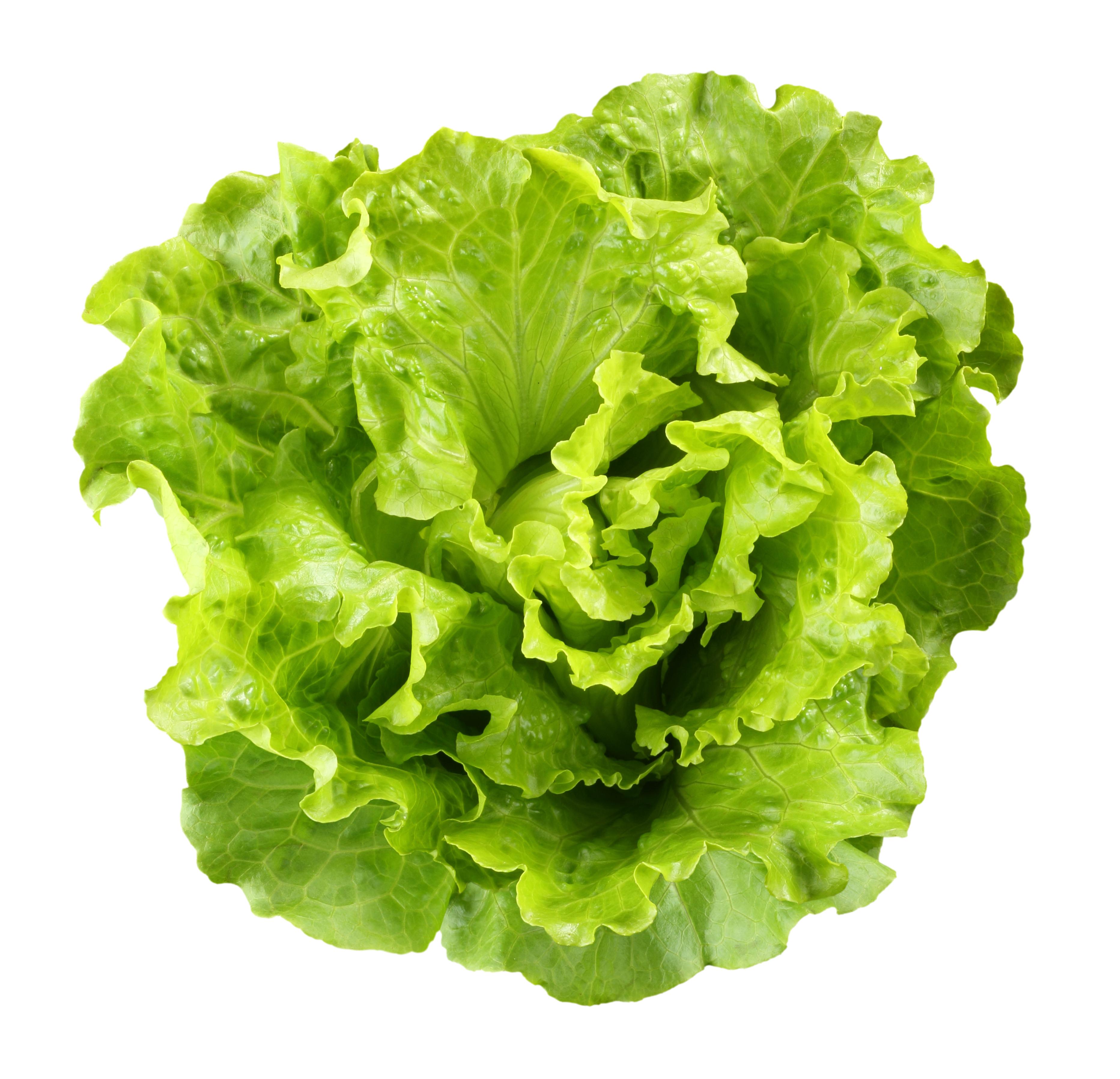Lettuce clip art 3 4.