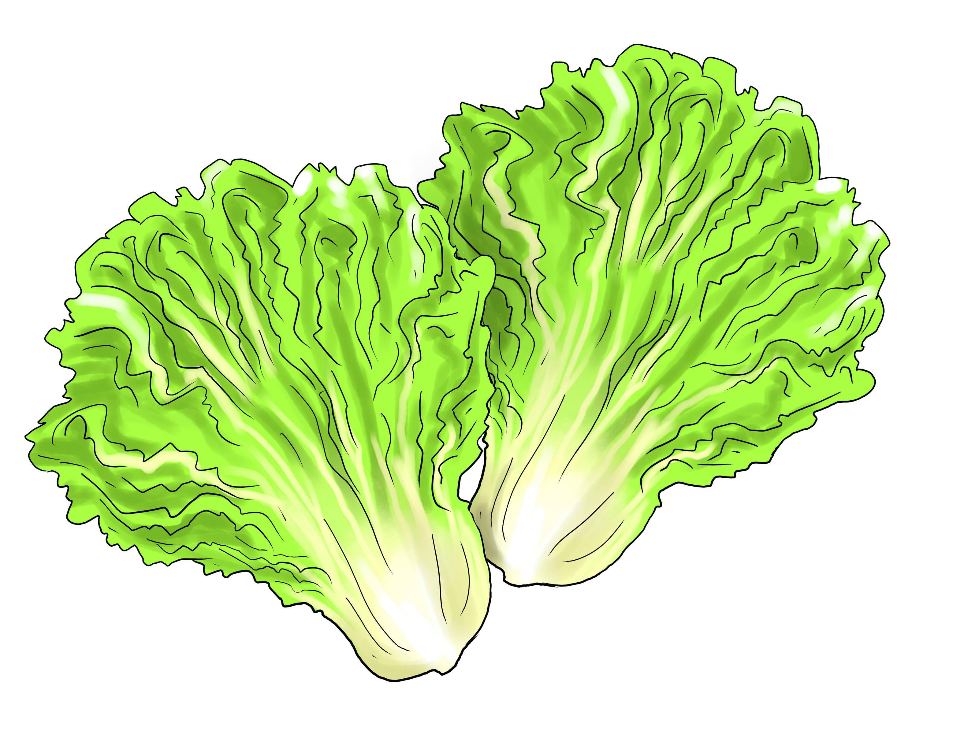 Hd lettuce leaf clipart cdr.