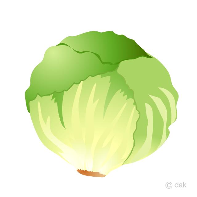 Lettuce Clipart Free Picture|Illustoon.