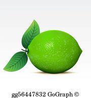 Lime Clip Art.