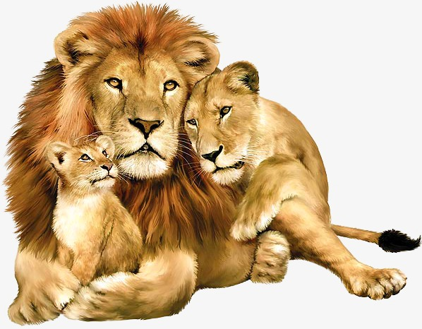 A Lion, Lion Clipart, Lion, Lions PNG Transparent Image and Clipart.