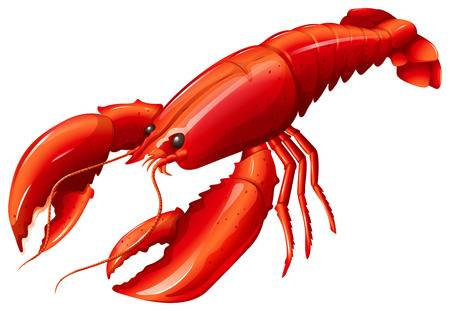 13,684 Lobster Stock Vector Illustration And Royalty Free Lobster.