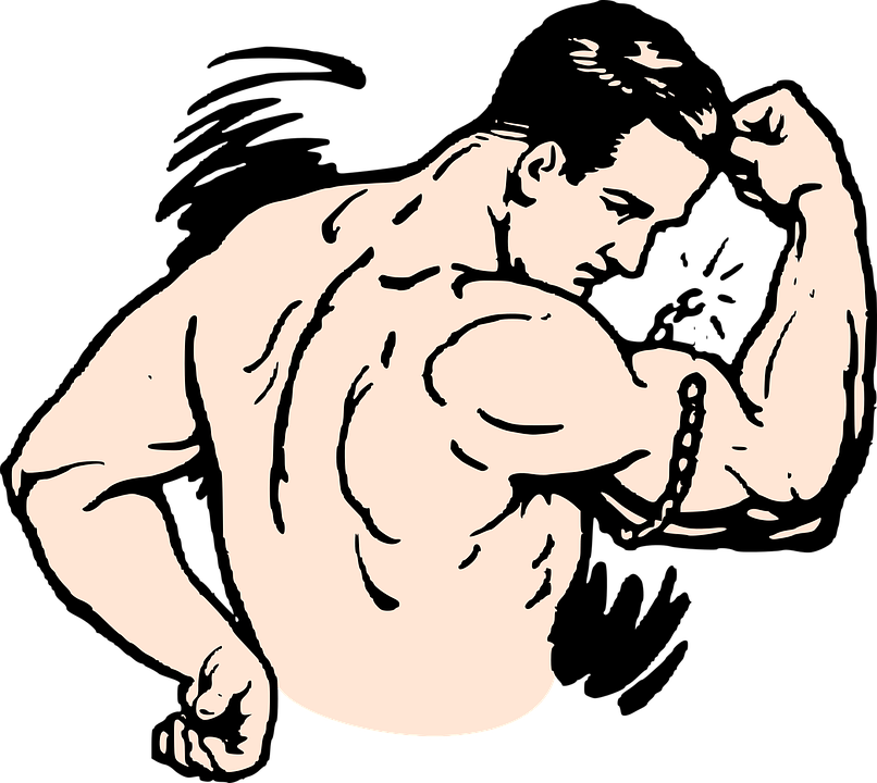 Collection of 14 free Muscle clipart muscle biceps crabs clipart.