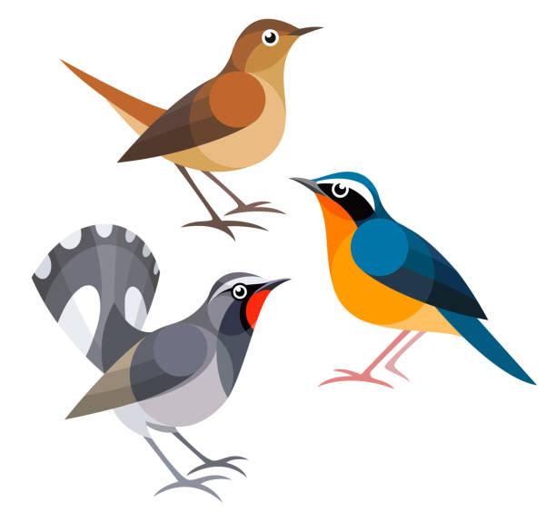 Best Nightingale Illustrations, Royalty.