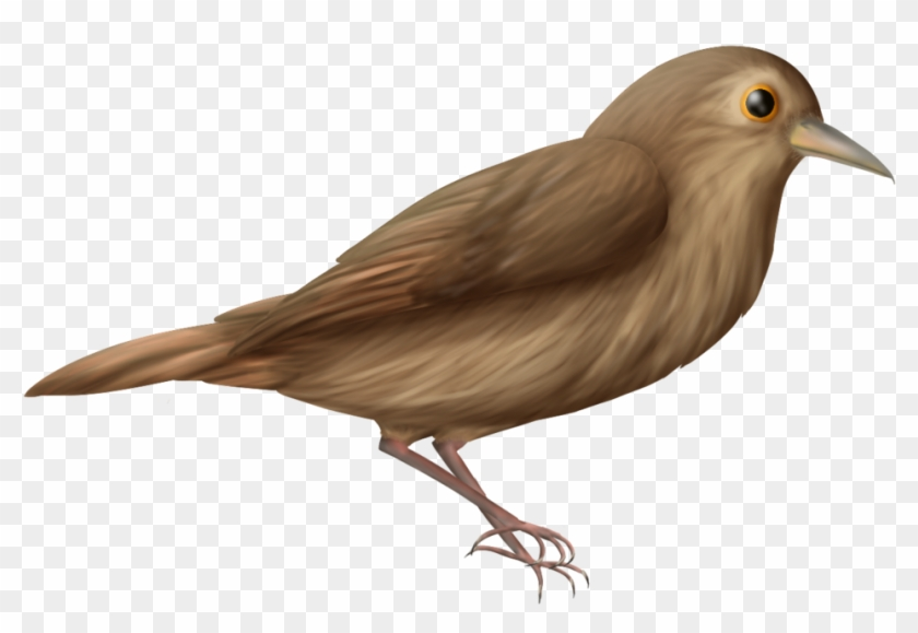 Nightingale Png.