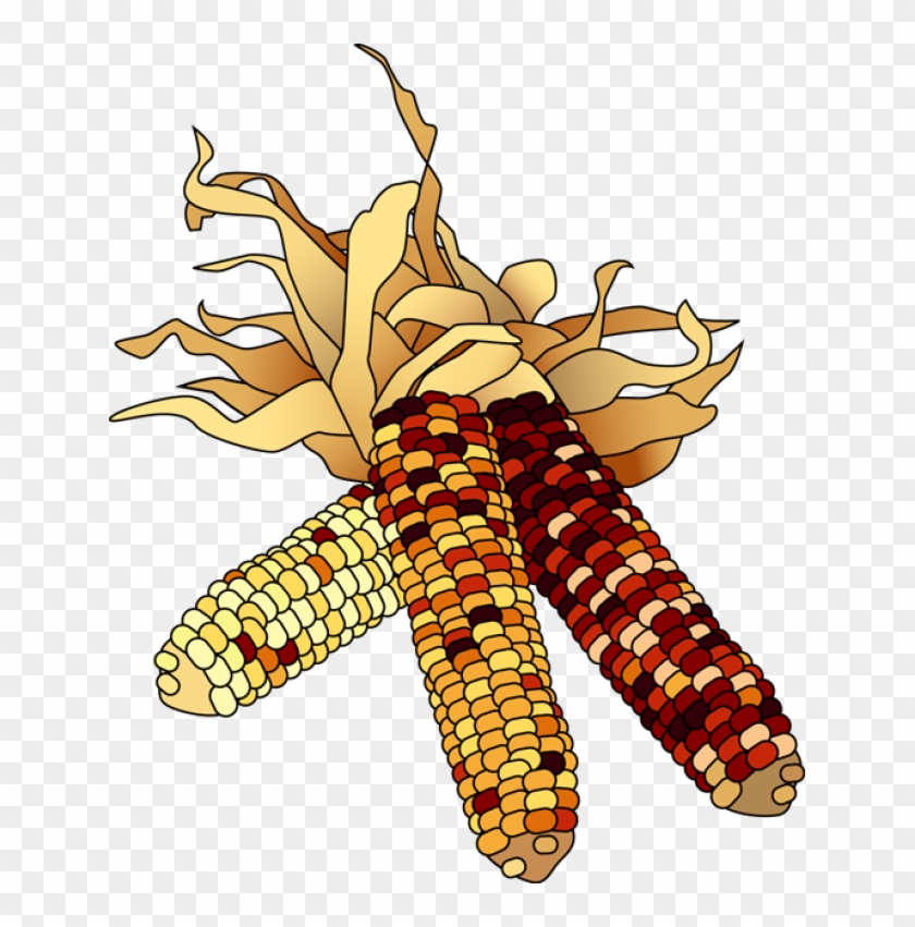 Indian Corn Image Png Clipart.