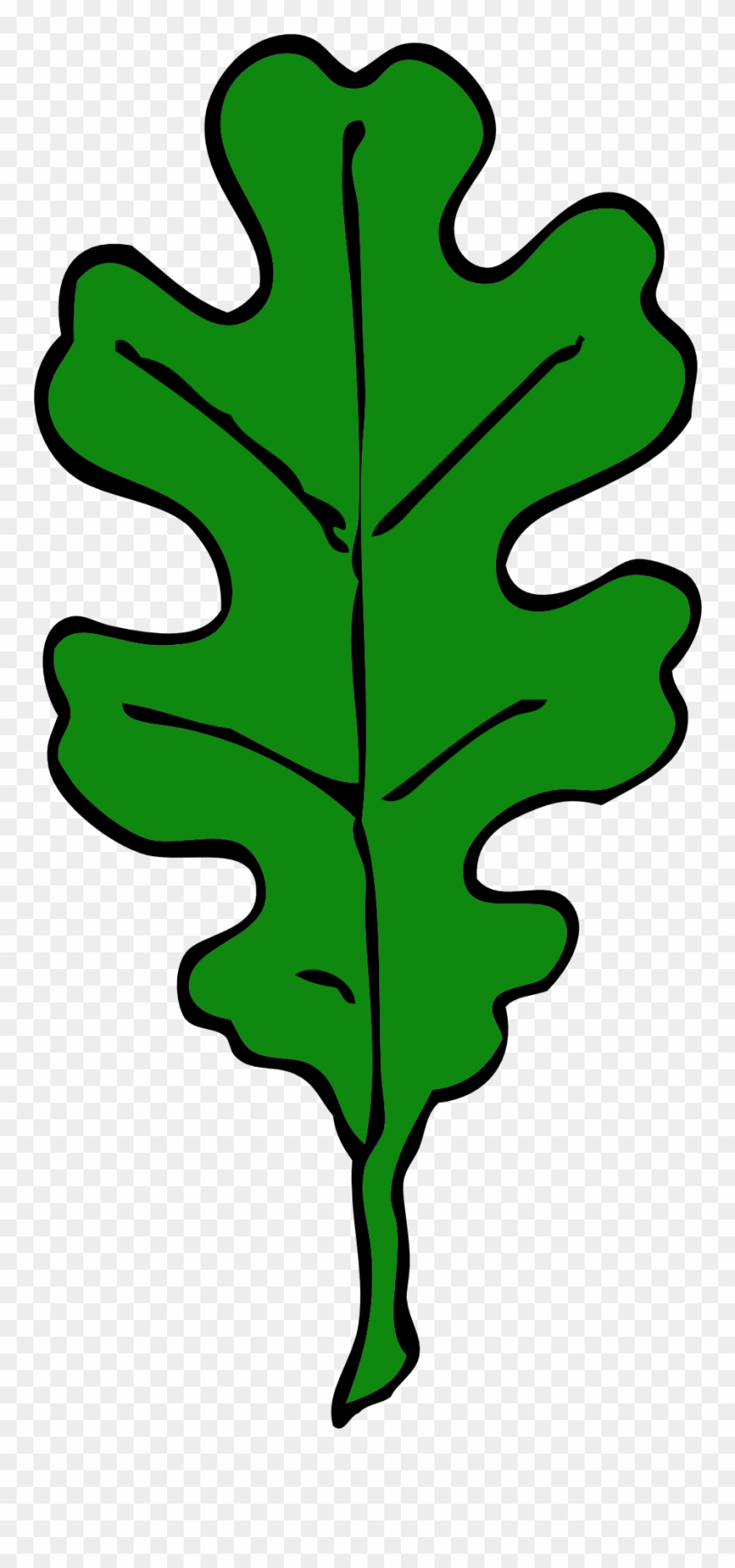 Forest, Oak Leaf, Green, Leaf, Tree, Leaves, Oak.