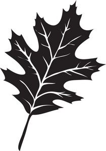 Leaf Clipart Image: The Silhouette Of A Oak Leaf.