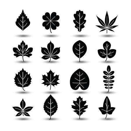 46,813 Oak Leaf Cliparts, Stock Vector And Royalty Free Oak Leaf.