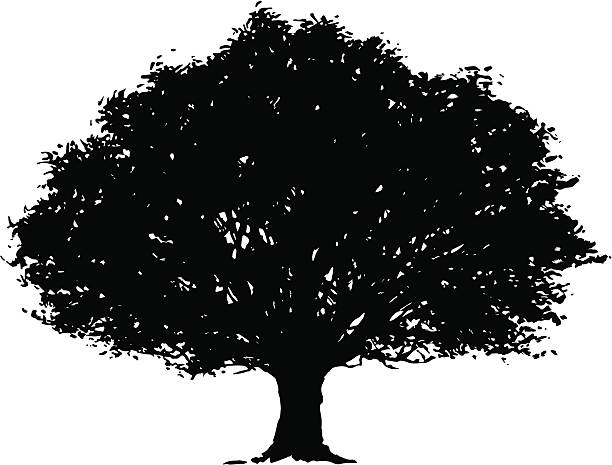 Best Oak Tree Illustrations, Royalty.