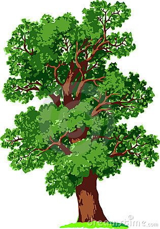 Oak tree. Vector ….