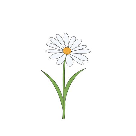 Clip Art Daisy Stock Photos And Images.