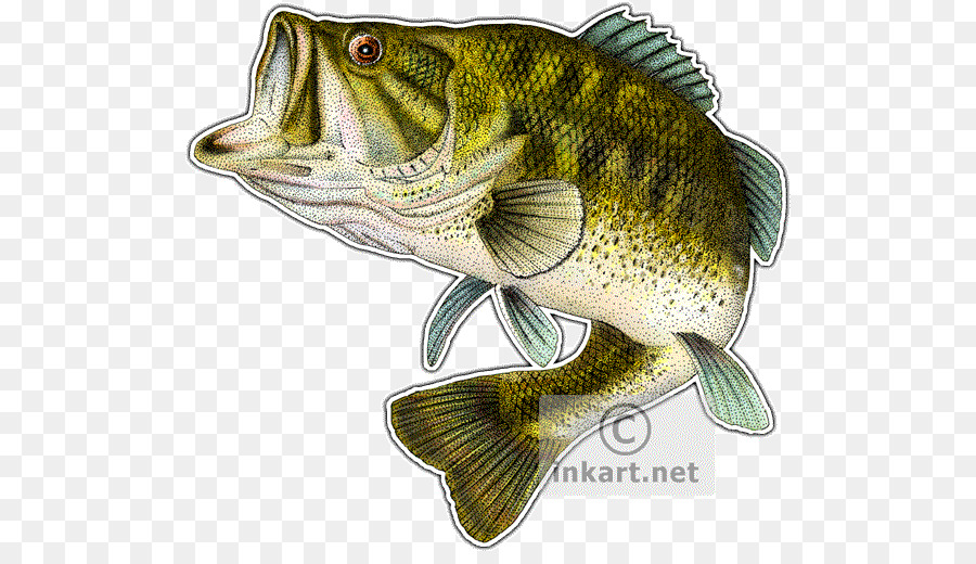 Fishing Cartoon clipart.