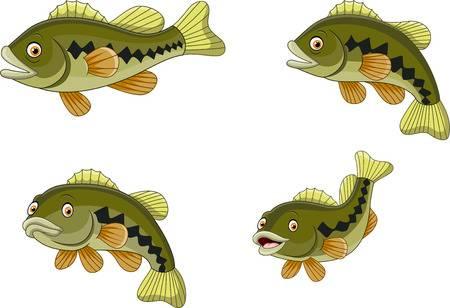 3,365 Bass Fish Cliparts, Stock Vector And Royalty Free Bass Fish.