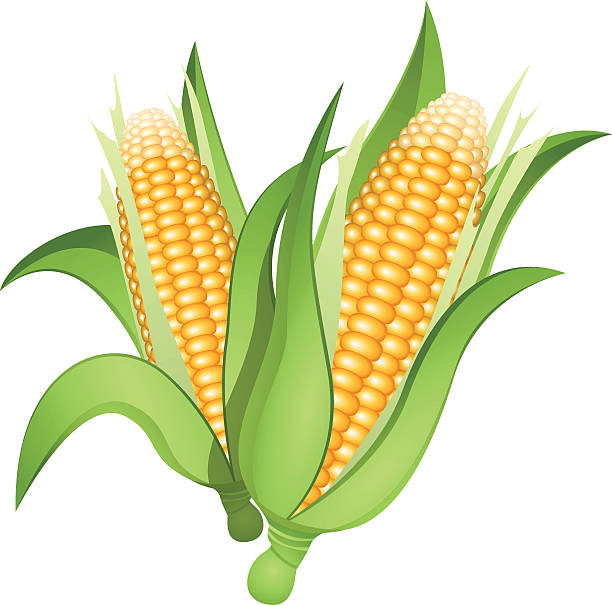 Best Corn On The Cob Illustrations, Royalty.