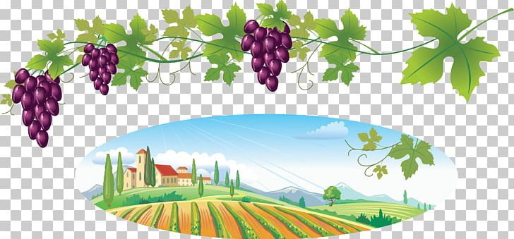 Common Grape Vine Wine PNG, Clipart, Art, Berry, Branch, Clip Art.