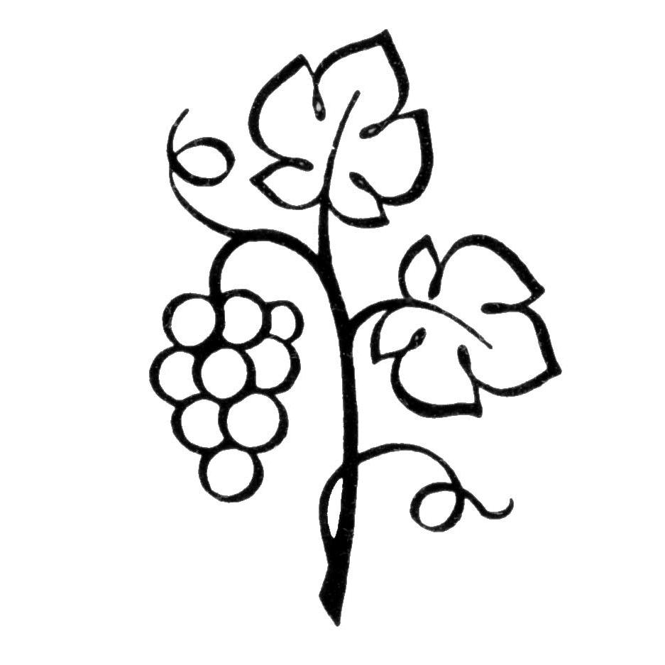 Grape Vine Clipart.