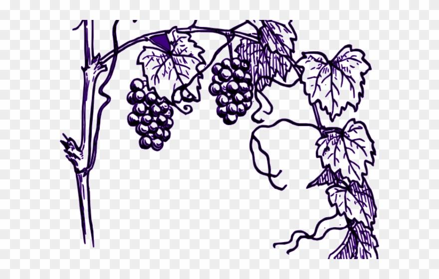 Grapes Clipart Vine Clip Art.