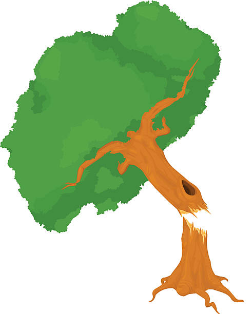 Best Fallen Tree Illustrations, Royalty.