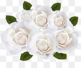 White Rose PNG.