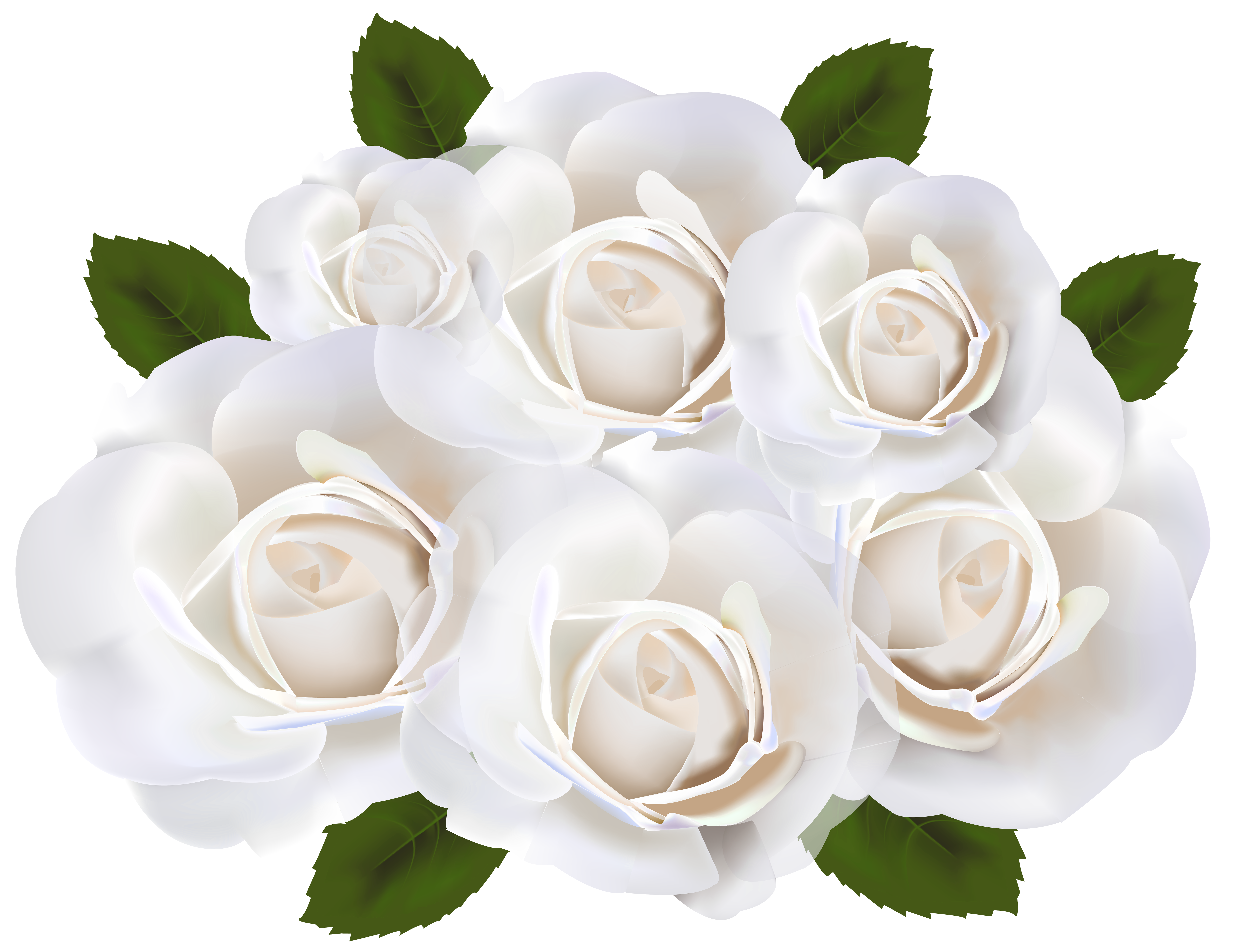 White Roses PNG Clip Art Transparent Image.