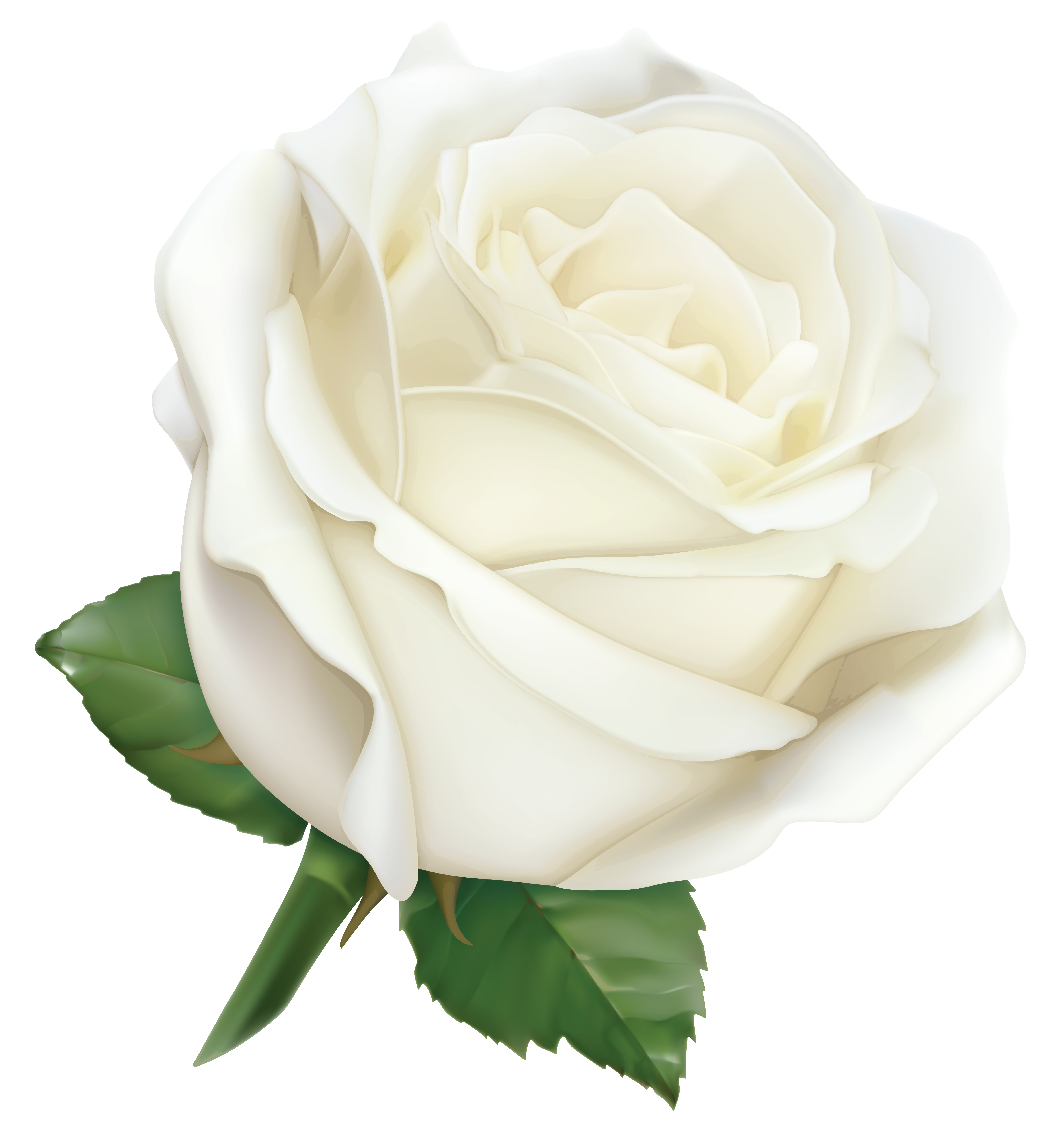 Large White Rose PNG Clipart Image.
