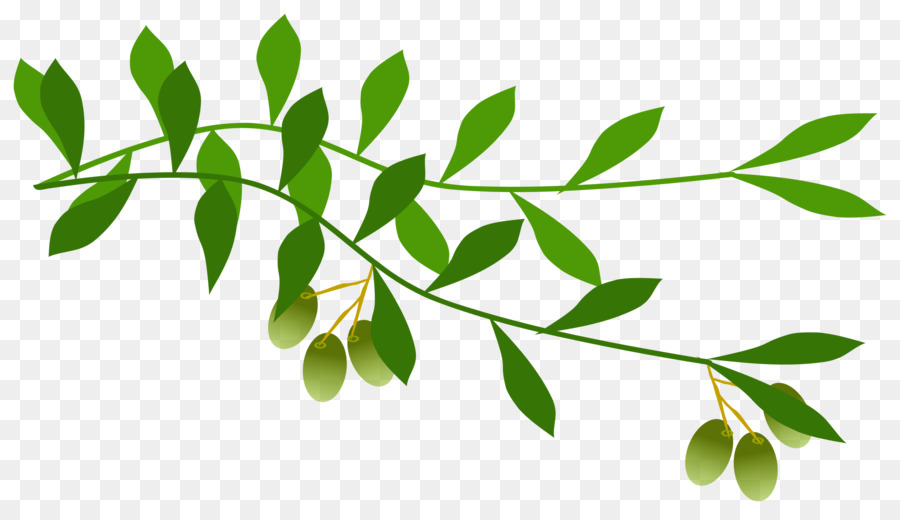 Olive Leaf clipart.