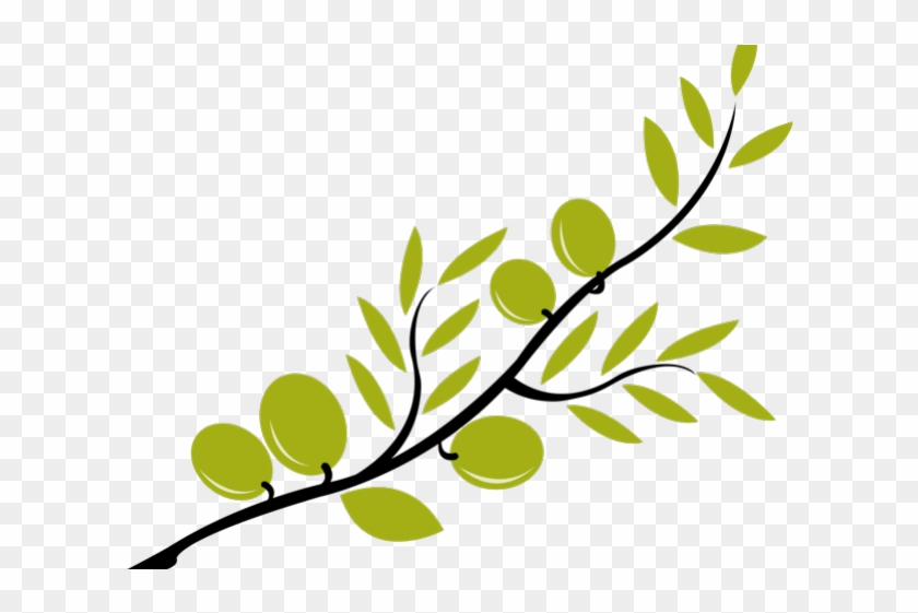 Branch Clipart Olive Oil.
