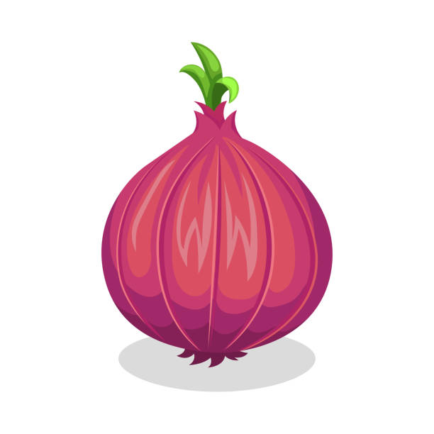 Best Red Onion Illustrations, Royalty.