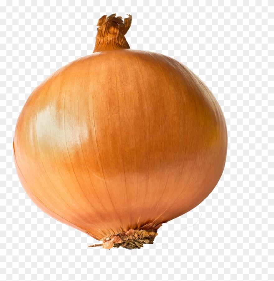 Onion Free Transparent Images.