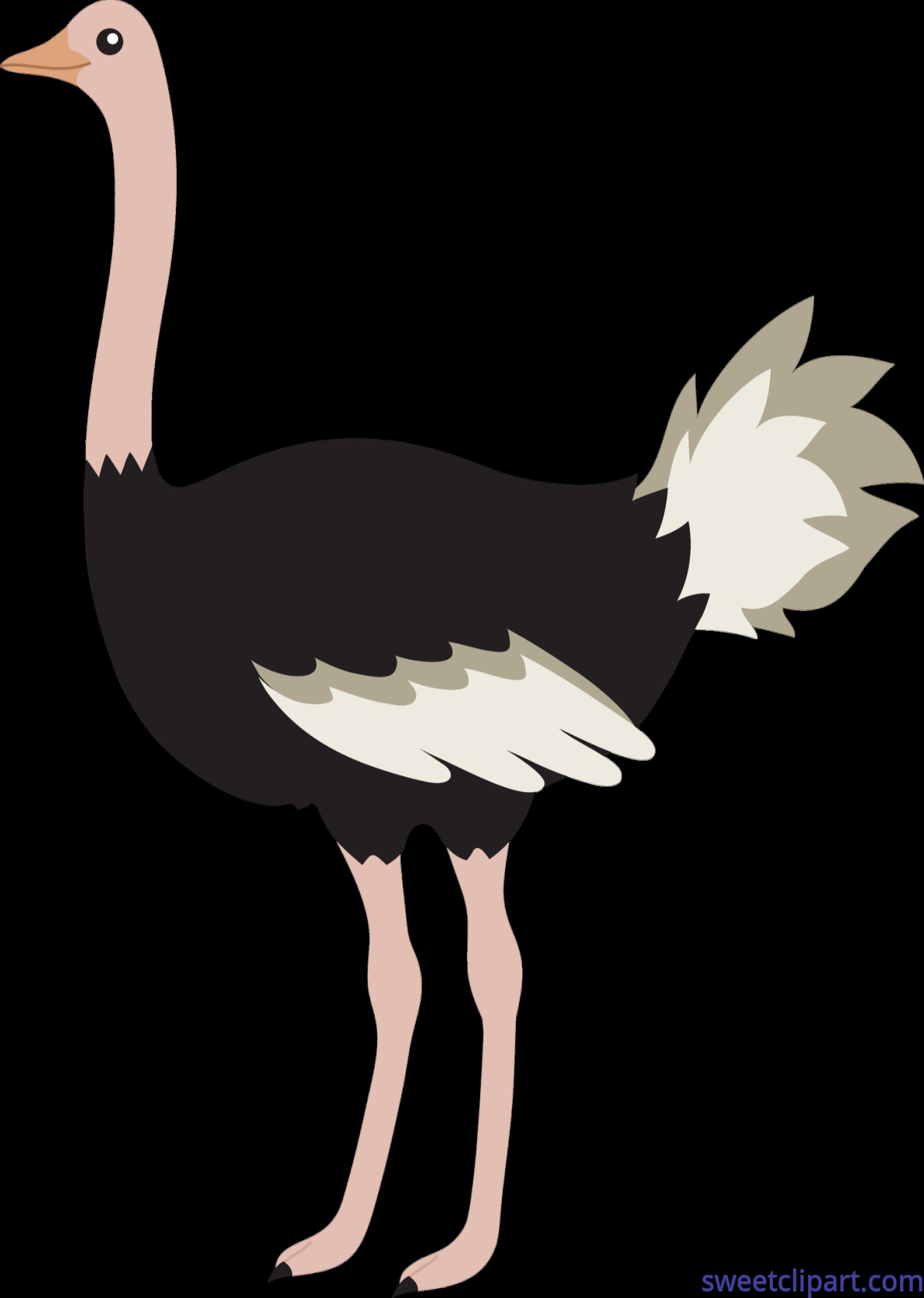 Ostrich Clip Art.