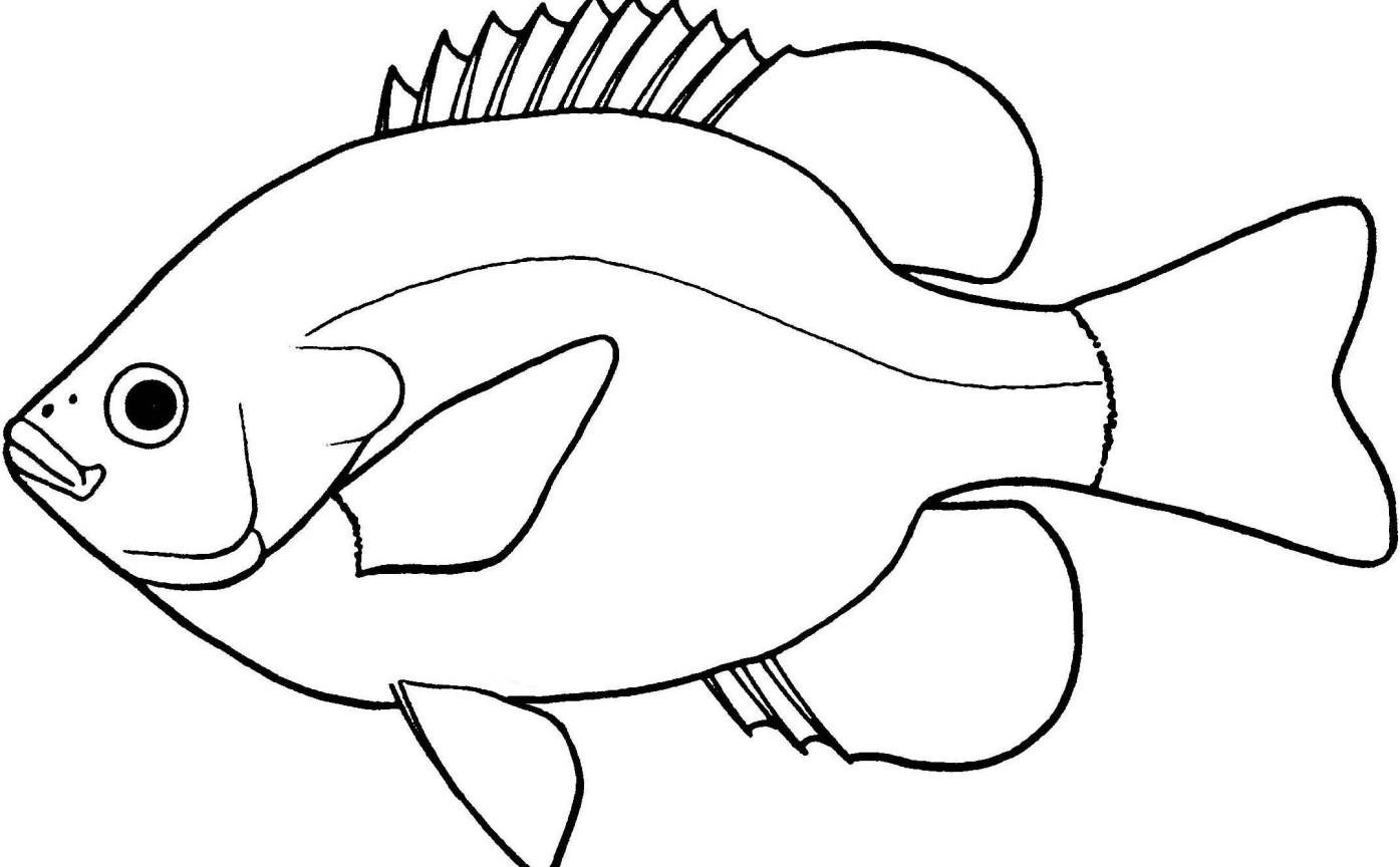 Fish Clipart Outline Autosparesuk Within Clipart Black And White.