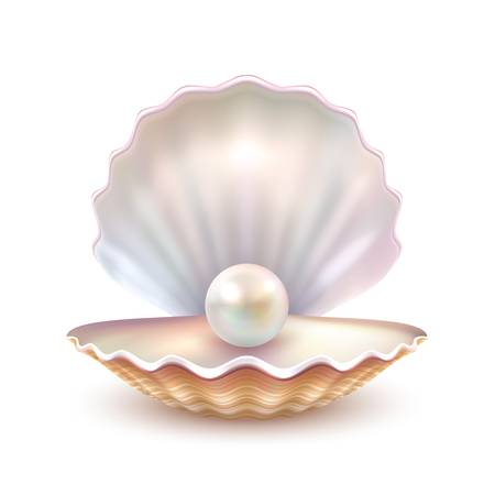 4,389 Oyster Shell Stock Vector Illustration And Royalty Free Oyster.