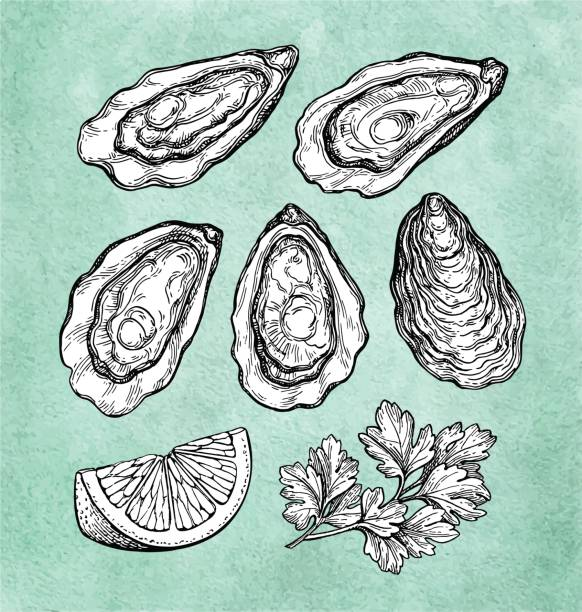 Top 60 Oyster Shell Clip Art, Vector Graphics and Illustrations.